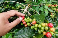 Stock Photo of close up hand keep coffee beans
