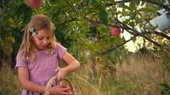 A cute young girl picking apples off of a tree Stock Footage