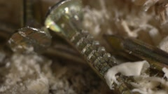 wood shavings and nails - stock footage