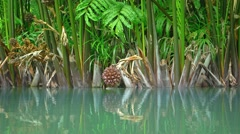 Exotic, Tropical Plants along a Flooded Pond Stock Footage