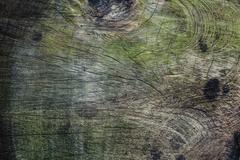 Closeup on the rings of a felled tree - stock photo