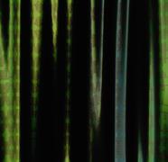 Green curtains - stock illustration