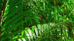 Rain on Tropical Wilderness Greenery, with Sound - stock footage