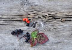 Leaves and Berries on Old Board Stock Photos