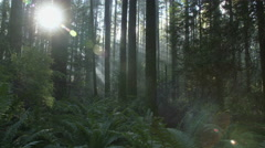 Pacific Northwest Forest Sun Flare dolly shot right Stock Footage