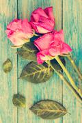Dried roses on blue wooden background Stock Photos