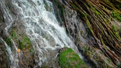 Tropical Waterfall over Mossy Rocks and Tree Roots, with Sound Stock Footage