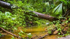 Tropical Wilderness Stream on a Rainy Day, with Sound Stock Footage
