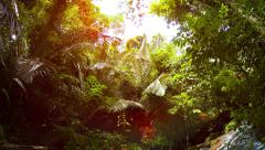 Tropical Waterfall Spills into a Natural Pool in the Rainforest, with Sound Stock Footage