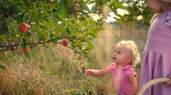 A cute little girl picks an apple off of a tree Stock Footage