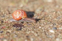 Grove snail on sand Stock Photos