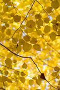 Leaves - autumnal colors Stock Photos