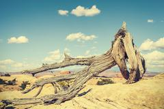 Retro toned dead tree, climate change concept picture Stock Photos