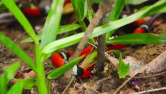 Coral snake in tropical forest Stock Footage