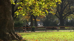 Leaves are falling in the park Stock Footage