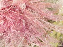 pink ice flower abstraction - stock photo