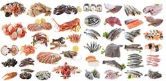 seafood fishs and shellfish - stock photo