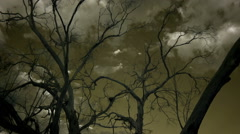 Stock Video Footage of Eerie Infrared tree