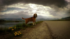 Lightning strikes while beagle's on the walk Stock Footage