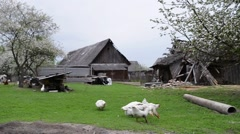 Chickens and geese in farmyard - stock footage