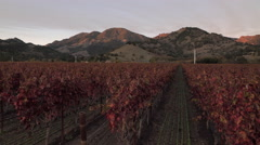 Sunset on mountains behind red vineyards Stock Footage