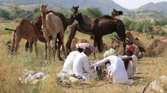 Indian men and herd camels attended the annual Pushkar Camel Mela. India - stock footage