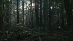 Pacific Northwest Forest Misty Morning dolly shot Stock Footage