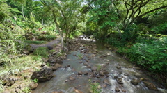 Looking Down Stream in Tropical Jungle Stock Footage