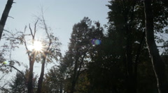 Sun reflection through the dry trees,pan left,panoramic view,nature beauty. Stock Footage