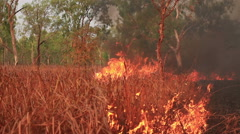 Grass fire blaze Stock Footage
