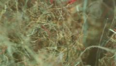 Dust bunny dirt up close Stock Footage