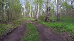 Road in the wood. Time lapse Stock Footage