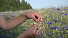 Teenager girl guesses on chamomile near blue cornflower field. 4K Stock Footage