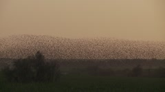 Flock of birds change shape Stock Footage