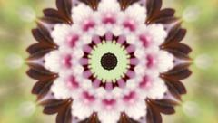 Adorable circle kaleidoscopic pattern of pink cherry blossom. Stock Footage