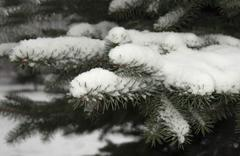 The first Snow fell on the branch to eat Stock Photos