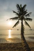 Palm sea sandy beach Sairee Beach Koh Tao Gulf of Thailand Thailand Asia Stock Photos