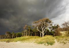 Stock Photo of Rain clouds over Darss Forest Weststrand Beach Baltic Sea Born auf dem Darss
