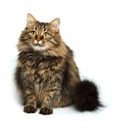 Cute fluffy cat isolated on white Stock Photos