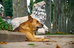 A ginger dog rests near the statue of a lion in Gulhane park. Istanbul - stock photo