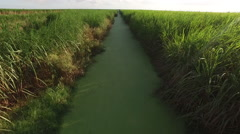 Flying down ravine in Cane field at 60fps - stock footage