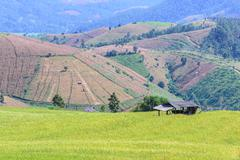 Terraced rice field with mountain background at Ban Pa Bong Piang, Chiang Mai - stock photo