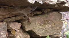 Cobwebs blown by wind tight on a stone with the inscription on it 55 Stock Footage