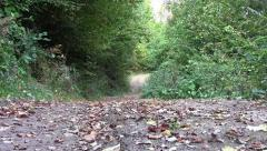 Zoom on a country road covered with dry leaves 32 Stock Footage