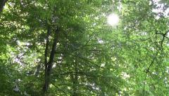 White sun seen through the leafy branches of a tree - 001 Stock Footage