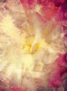 Abstract floral background - stock illustration