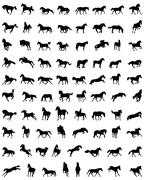 Silhouettes of horses Stock Illustration