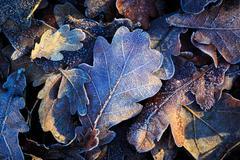 Nice oak's leafage Stock Photos