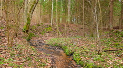 Spring forest with brook and flowers Stock Footage