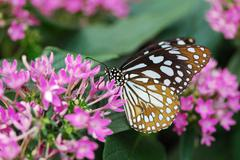 Monarch butterfly sitting on a flower Stock Photos